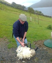 Sheep-shearing demonstration at Lough Na Fooey